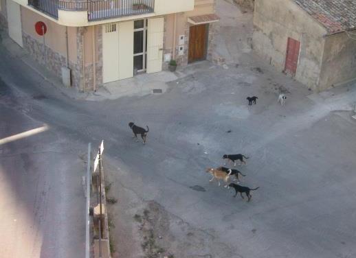 "Branco di cani ""vaganti"" in giro per il paese"