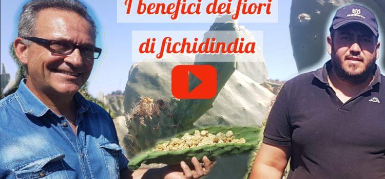VIDEO. Pietro Casola e i benefici dei fiori di fichidindia